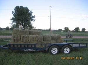 Ranch Dog Gaurding the Hay!